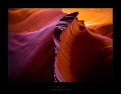 antelope wave