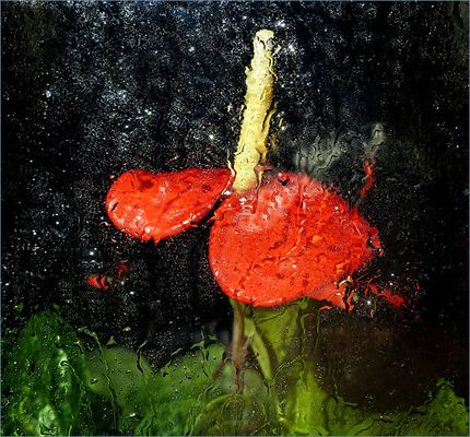 Anthurien  en  ventana en dia de lluvia