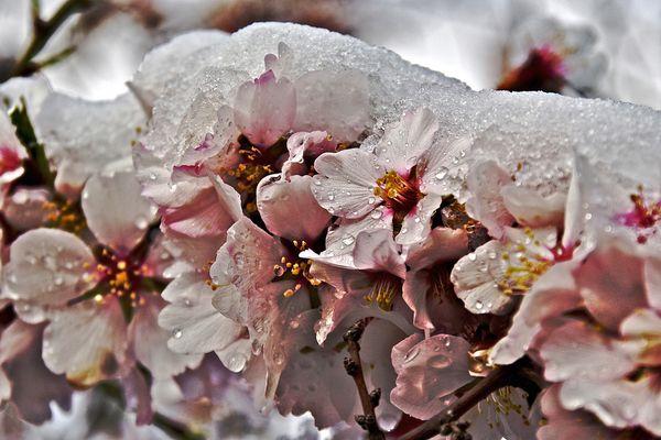 Anticipo primaveral