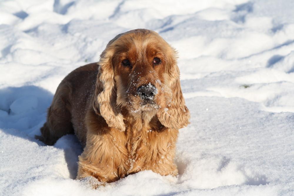 Anton mag Schnee