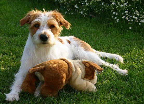 Anton von der Papiermühle mit Spielzeughund