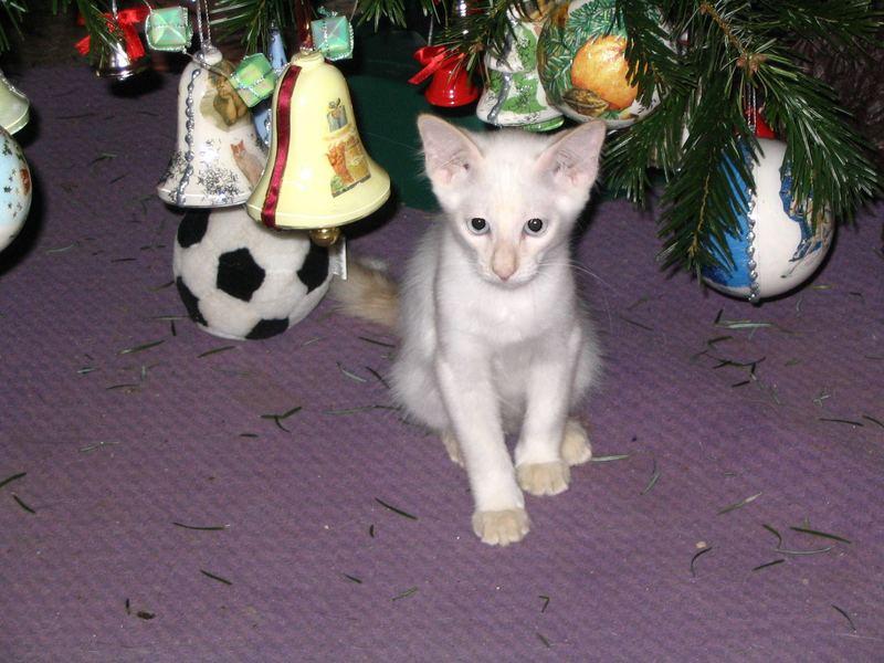 Anton`s erster Weihnachtsbaum