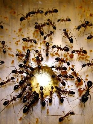 Ants Labotory by K.R