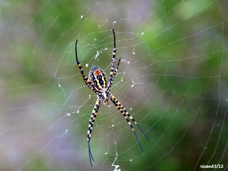 Anverso araña ?