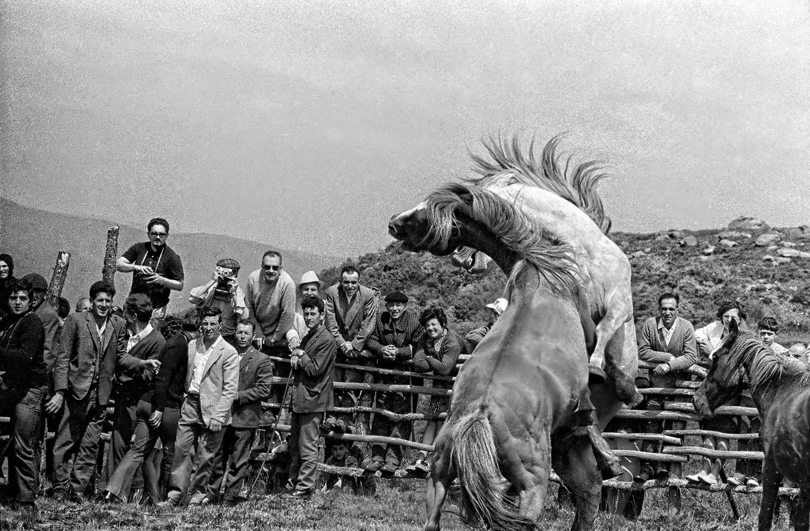 aÑO 1.964- -PELEA DE GARAÑONES.