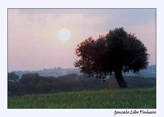 Ao Longe o Sol