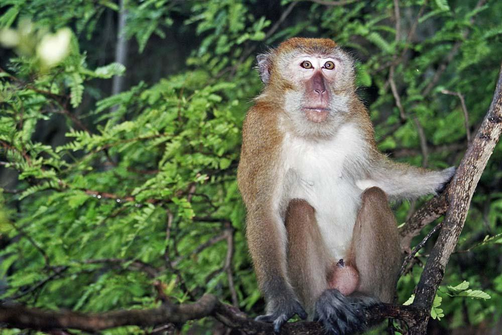 Ape should never kill Ape