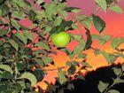 Apfel am Abend