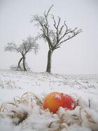 Apfel-Baum