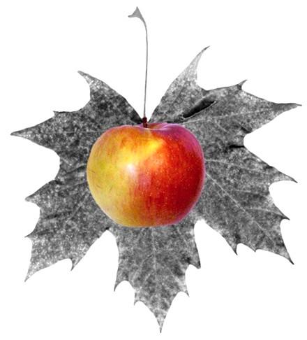 Apfel-Blatt