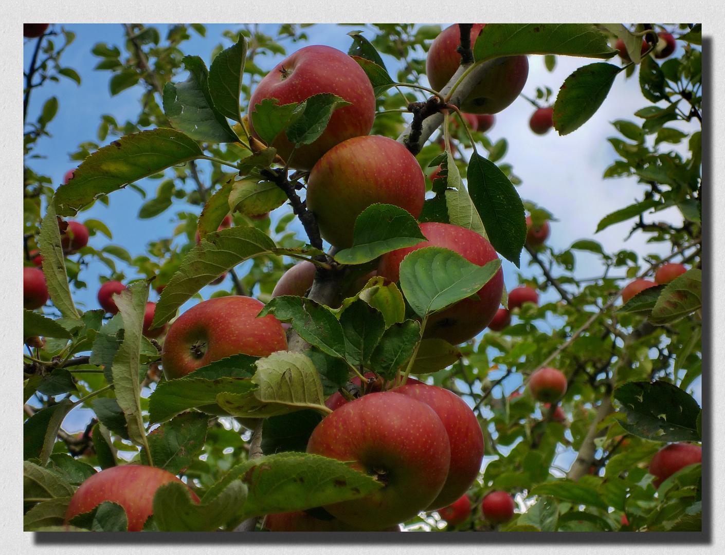 ~ Apfel ~