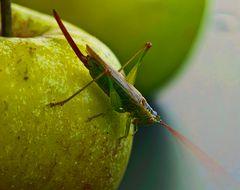Apfel-Flip