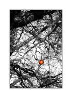 Apfel im Winter