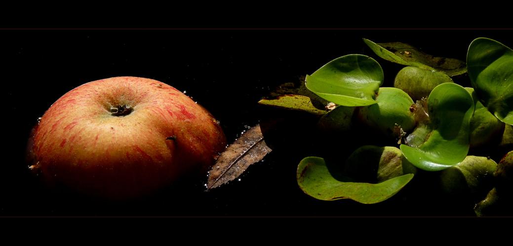 Apfel in Tei(ch)mantel