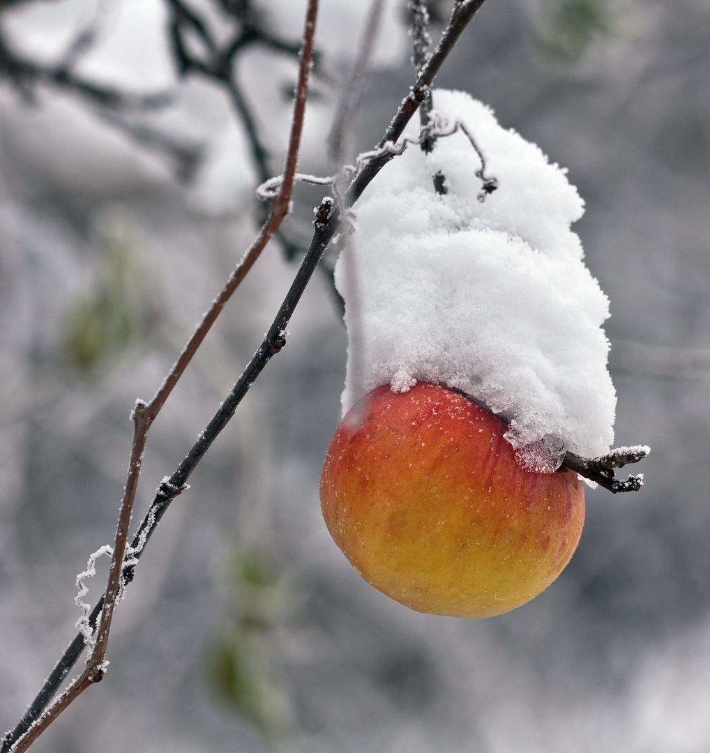 Apfel mit Schneehäubchen