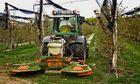Apfelanbau im steirischen Apfelland!