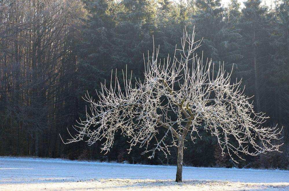 Apfelbaum im winter foto bild jahreszeiten winter for Goldfischteich im winter