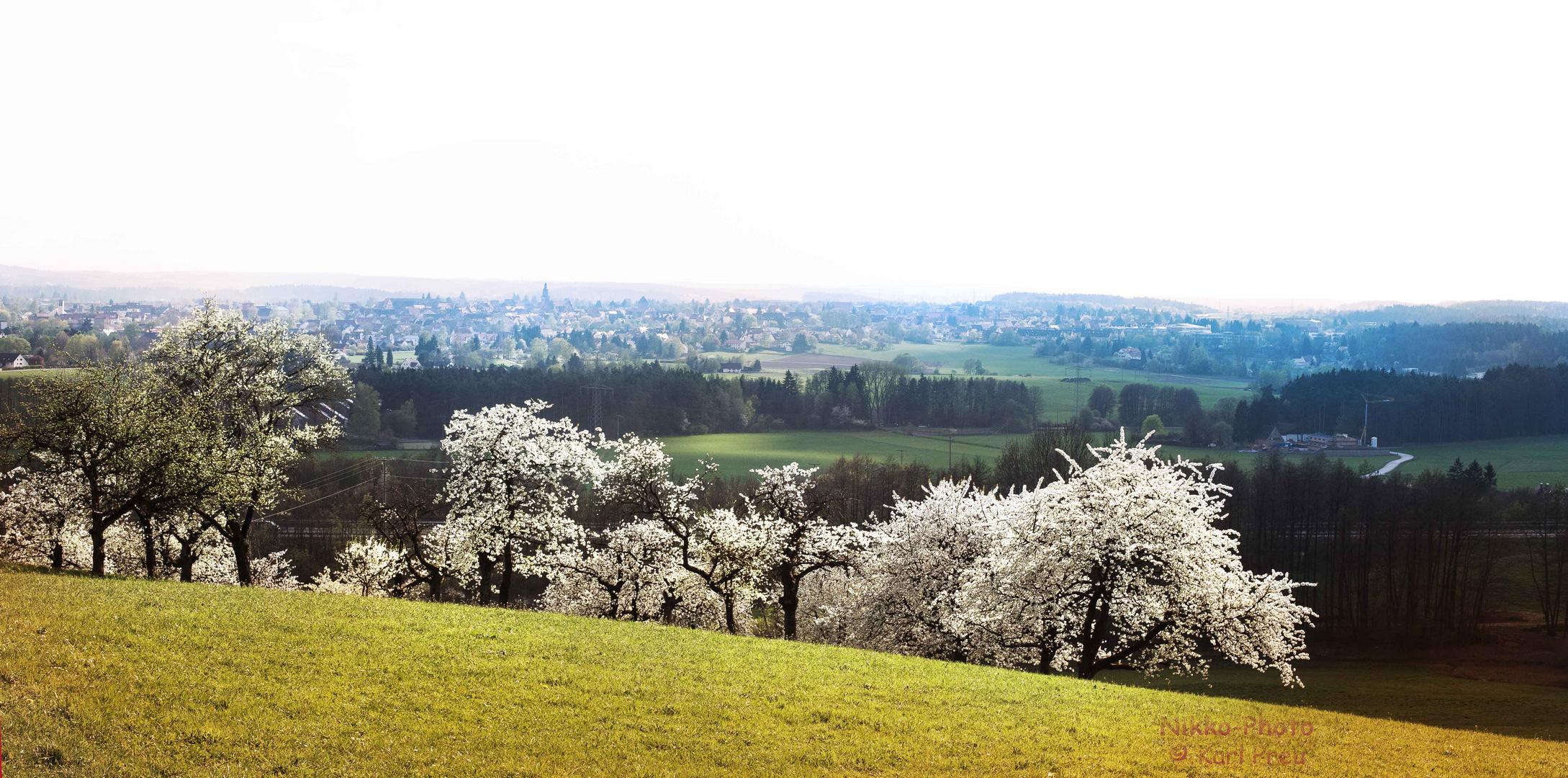 Apfelblüte in Mittelfranken