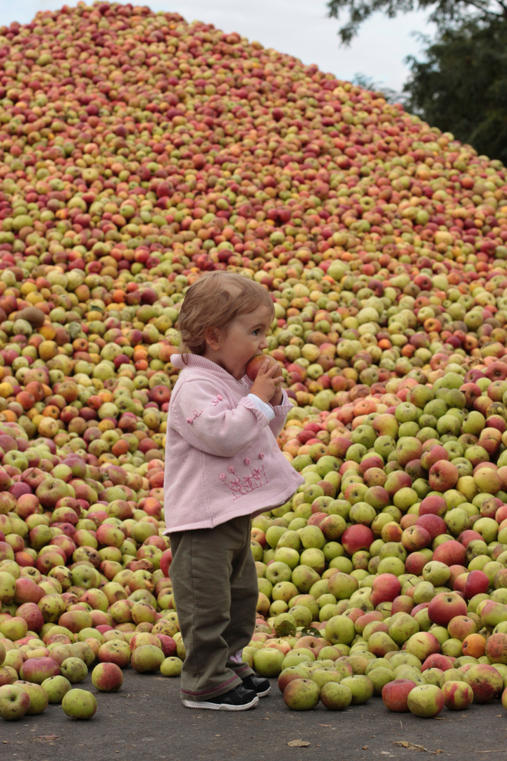 Apfelernte 2012