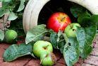 Apfelkörbchen