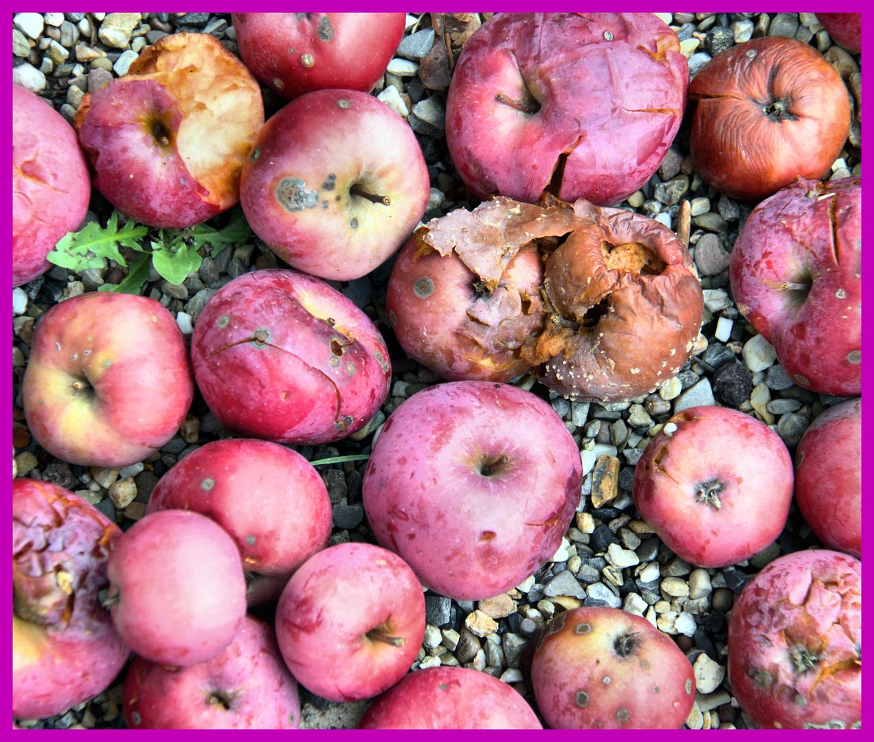 Apfelreste