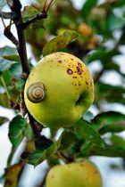 Apfelschmaus