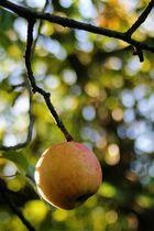 Apfelzeit