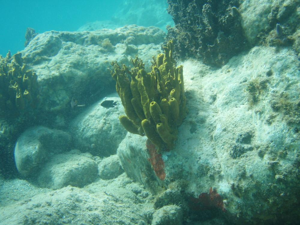 apnée 6 metres plage de corossol