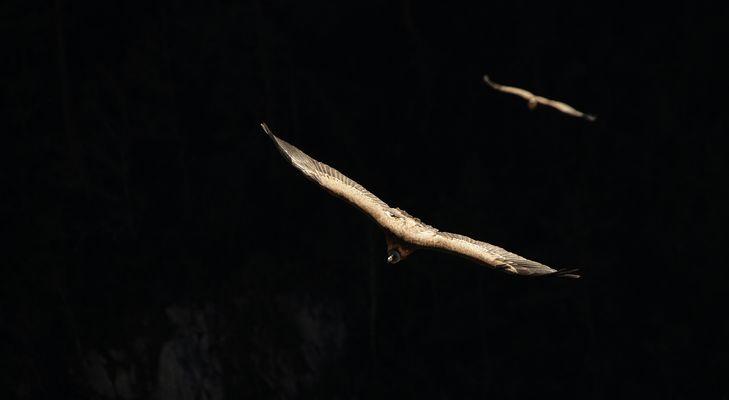 Apparition dans les gorges du verdon