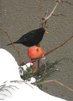 apple for bird
