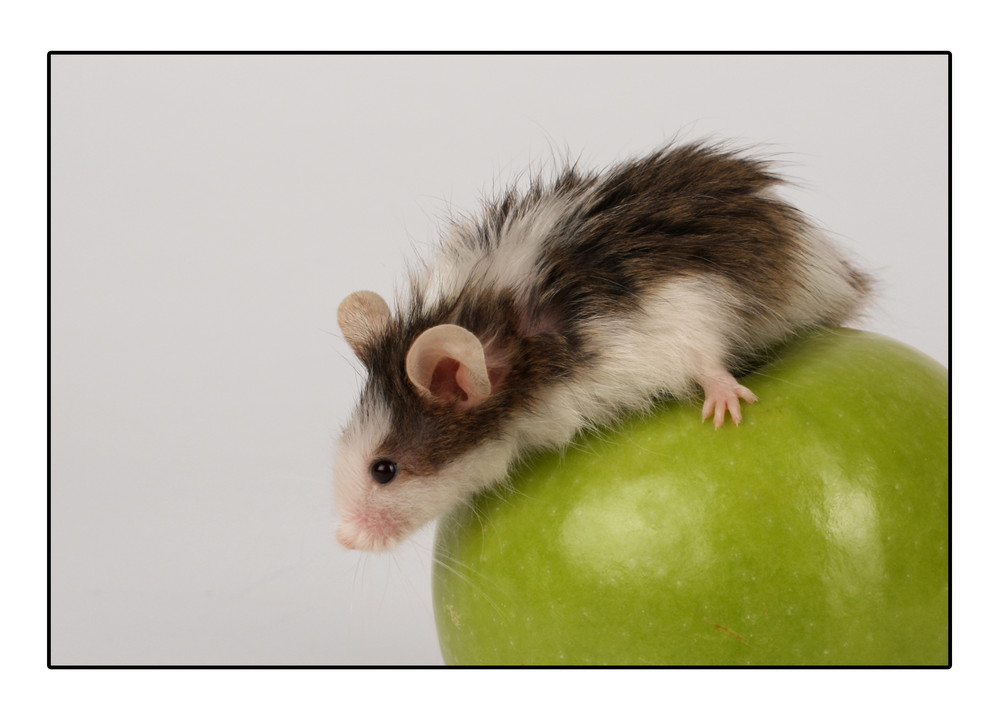 """""""Apple Mouse"""""""