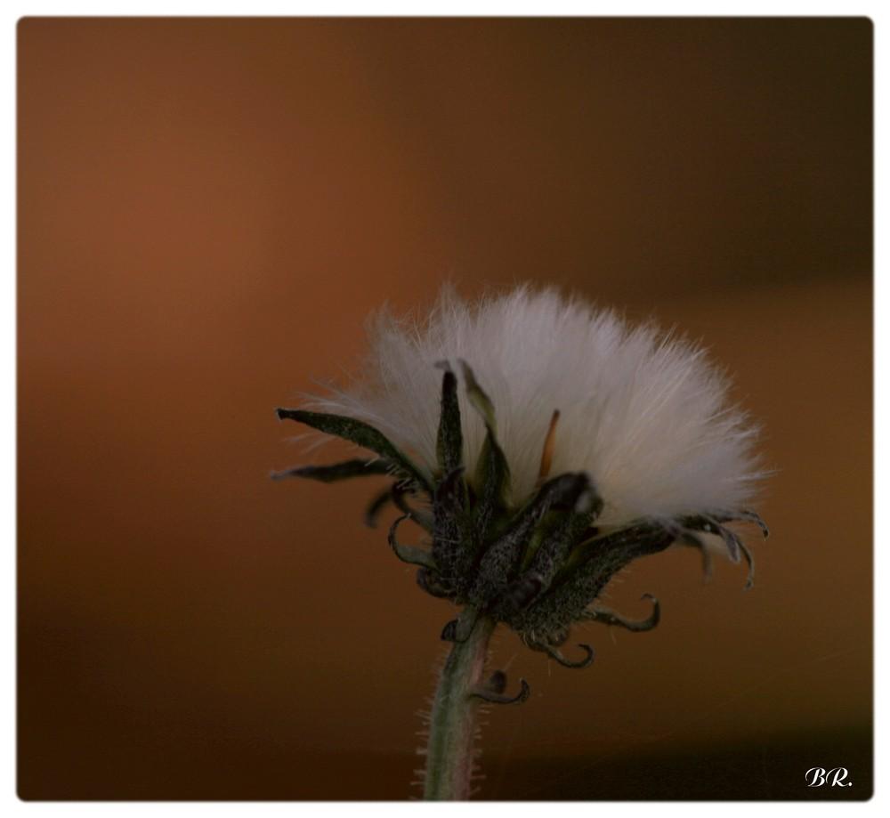 aprés la fleur