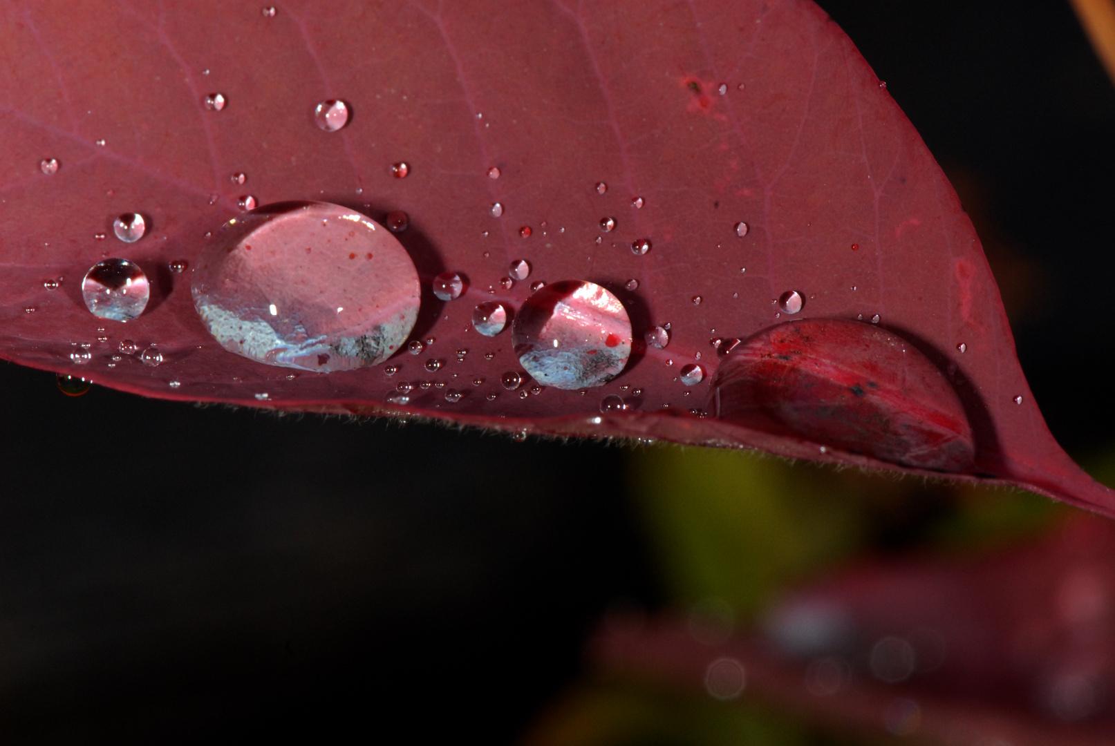 après la pluie 02