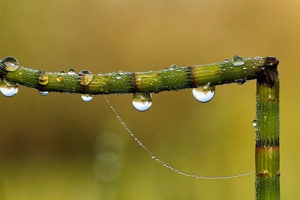 après la pluie ( 2 )