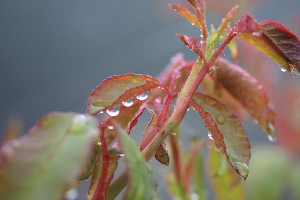 aprés la pluie 2