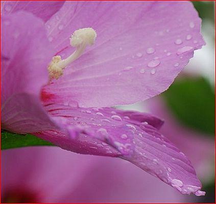 Après la pluie ...