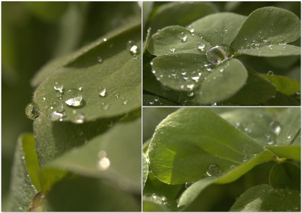 Aprés la pluie !!