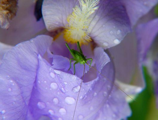 * après la pluie *