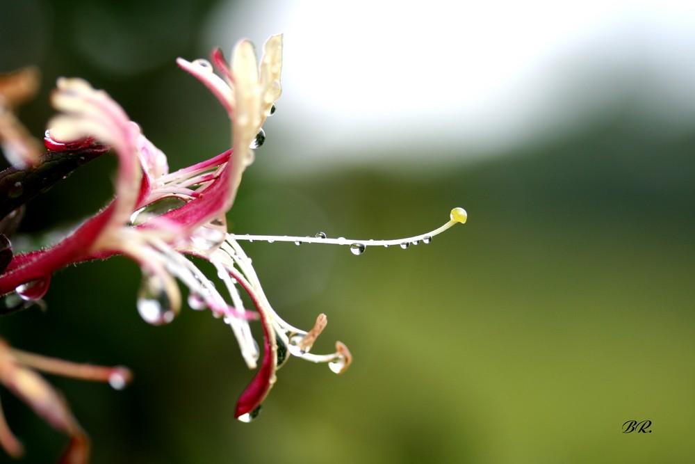 aprés la pluie 3
