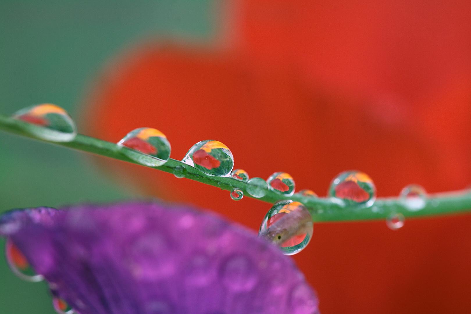 apres la pluie