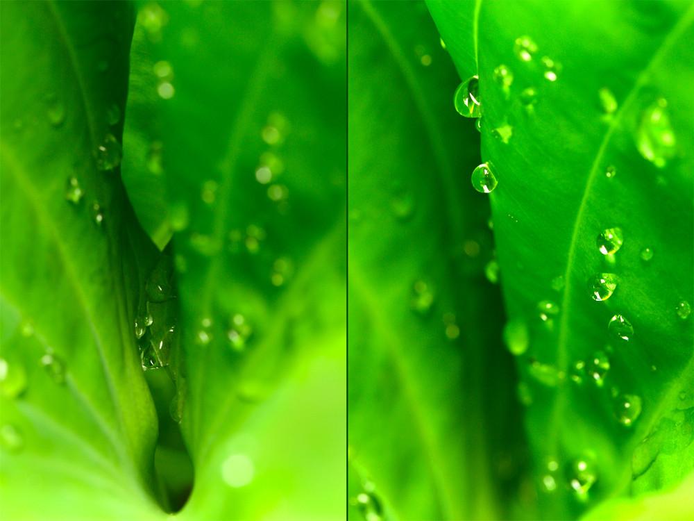 Après la pluie ... étonnante nature