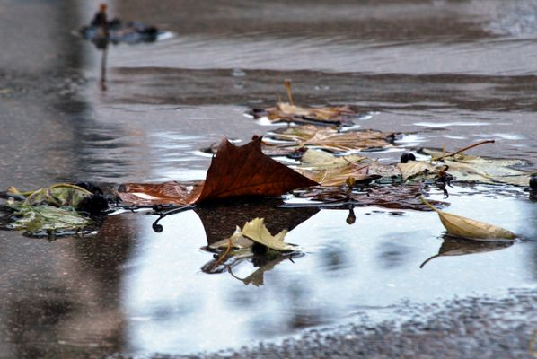 Après le déluge