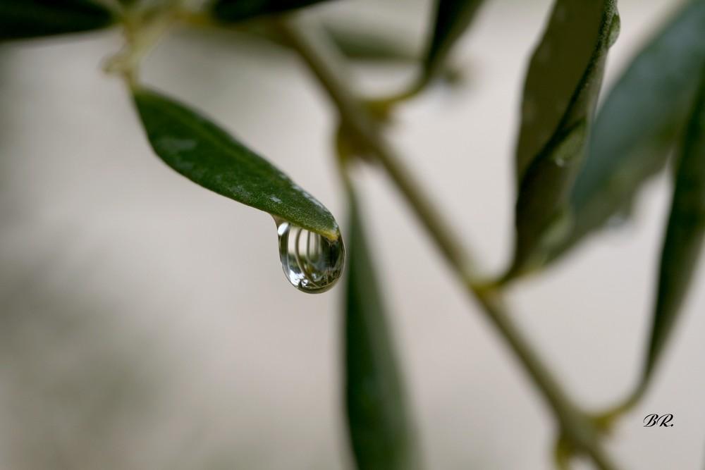 aprés le pluie 5
