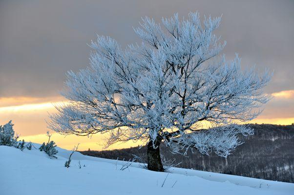 après midi d'hiver