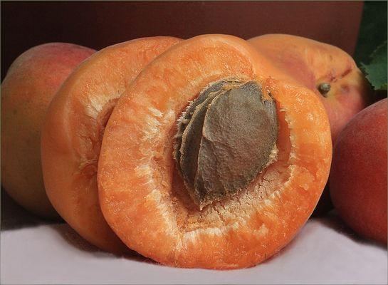 Aprikose für Paynes