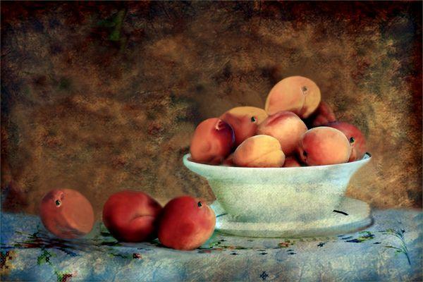 Aprikosen  als Stillleben
