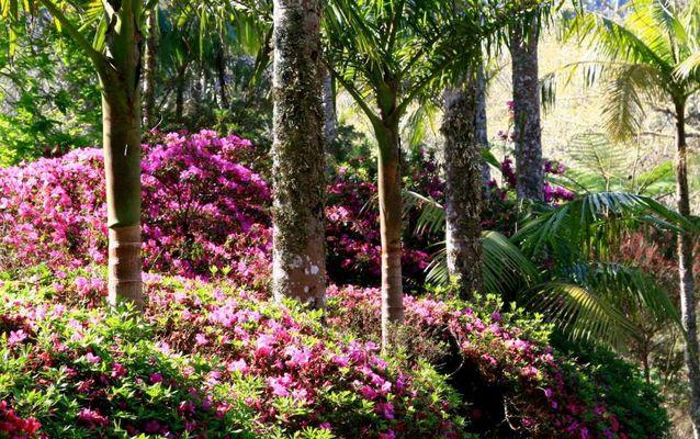 April auf den Azoren