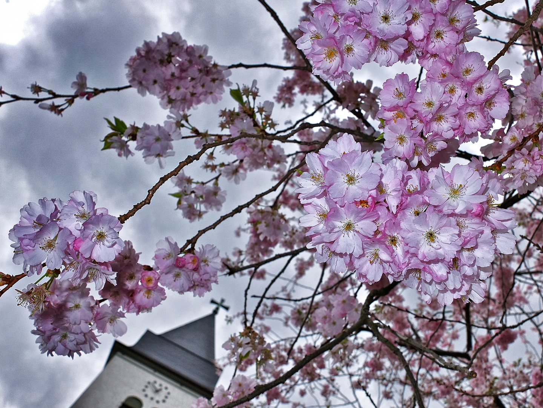 April in rosa-grau