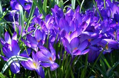 April-Mittwochsblümchen
