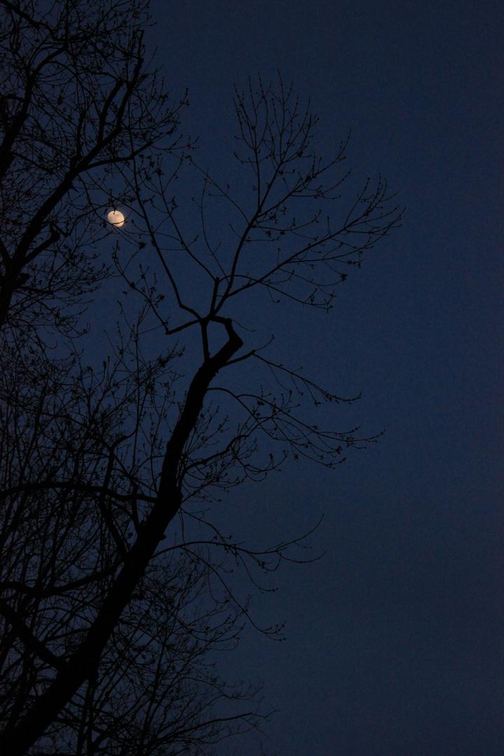 April Mond